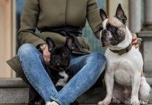 Accessori per cani di lusso: collari, guinzagli, borse