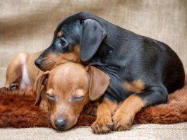 I migliori antipulci per cani