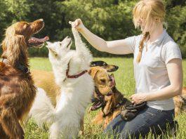 La passione per i cani e la professione di educatore