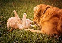 Cani di razza: quale cucciolo scegliere?