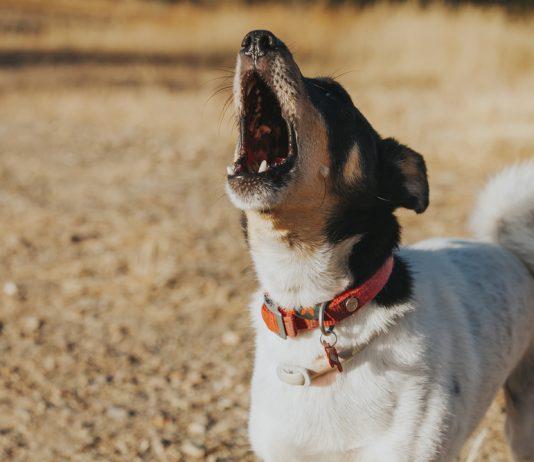 Consigli utili per intervenire se il cane abbaia di notte